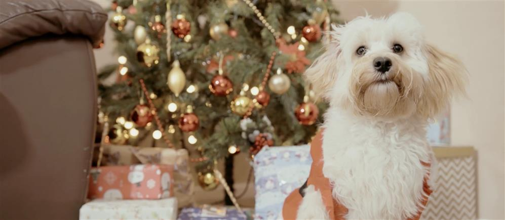 Get Christmas all wrapped up with top security tips from Santa Paws
